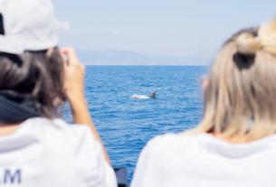 Menkab: conoscere il santuario dei cetacei per poterlo tutelare