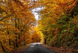 Cerco lavoro e progetti nei boschi e a contatto con la natura