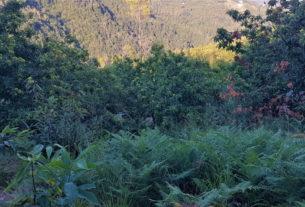 In un bosco di castagni rivivono antichi mestieri e si tramandano tradizioni