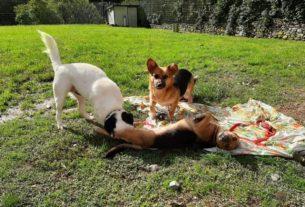 """""""Il cane giusto alla famiglia giusta"""": le adozioni responsabili del Buoncanile"""