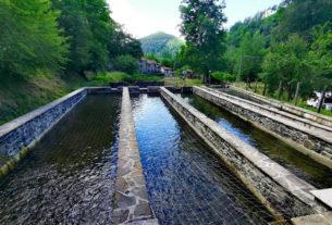 Il sogno di due giovani del Casentino diventa esempio virtuoso per le acquacolture nel mondo