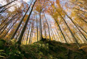 """""""Tuteliamo i boschi"""": le associazioni scrivono ai ministri"""