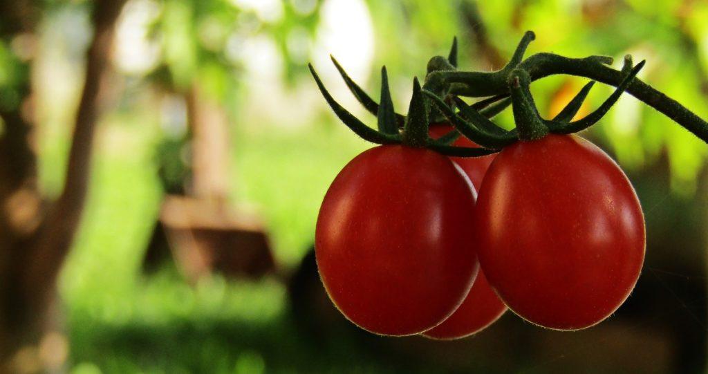 tomatoes 2787256 1920