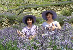 Due sorelle coltivano la lavanda tramandando l'antico mestiere della valle