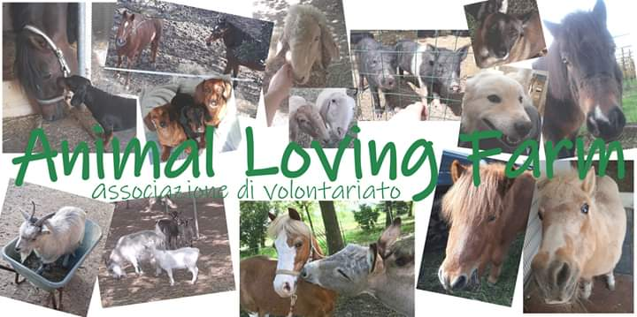 Cerco casa con terreno per rifugio animali