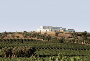Agricoltore, con esperienza nel turismo, offre collaborazione ad un'azienda agricola/masseria