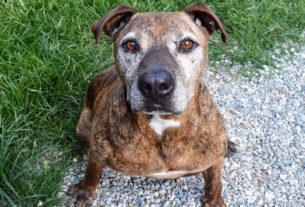 Mai più Ring, la campagna di adozioni a distanza per i cani ex combattenti
