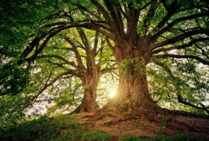 Il bosco è un mondo: intervista al cercatore d'alberi Tiziano Fratus