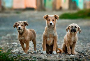 Cerco persone interessate ad investire in un progetto di asilo per cani