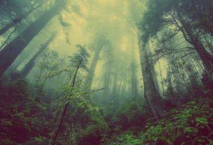 Le Immersioni Forestali e il ruolo della Natura nell'epoca contemporanea
