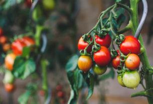 """Un ritorno degli OGM in Italia? Le associazioni denunciano """"il colpo di mano"""""""