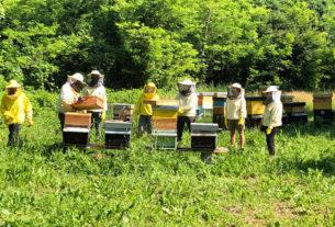 Le aziende del territorio sperimentano l'apicoltura sociale con i rifugiati