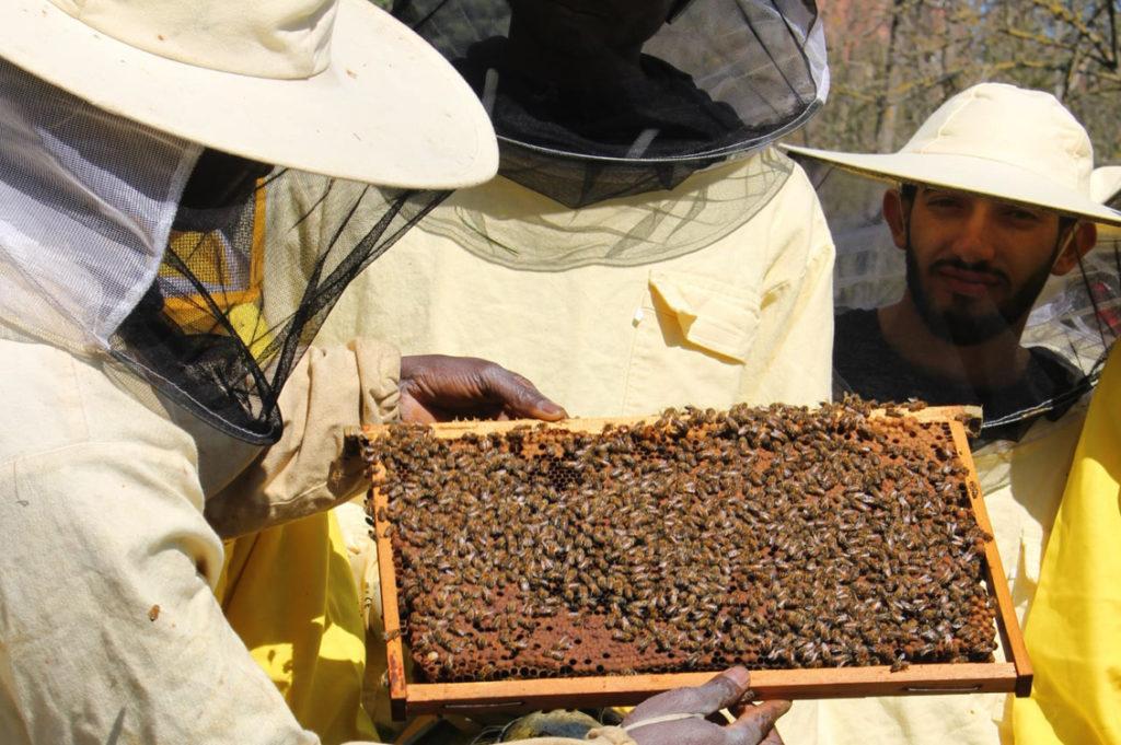 Bee my Job2