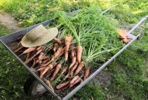 Negli ultimi sette anni abbiamo visto l'esplosione della piccola agricoltura in Italia. Parola di Nicola Savio