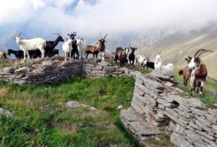 In Val Grande il ritorno dei montanari ripopola e risveglia la borgata