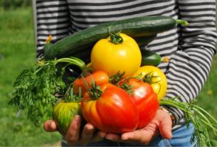 Il ritorno all'agricoltura degli under 35