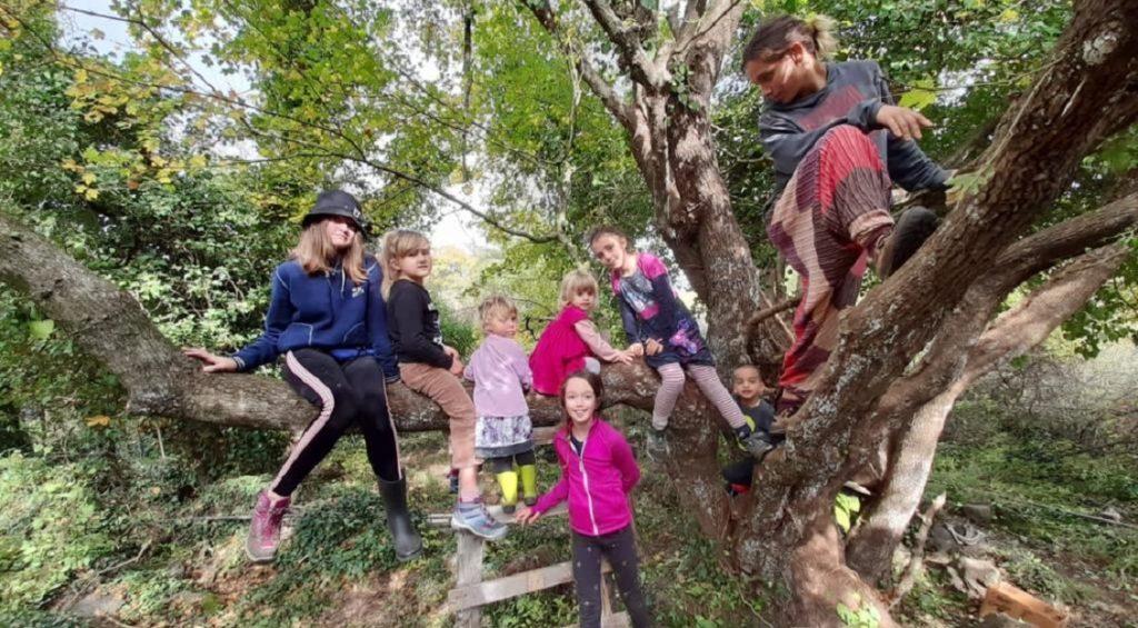 albero della tuscia social