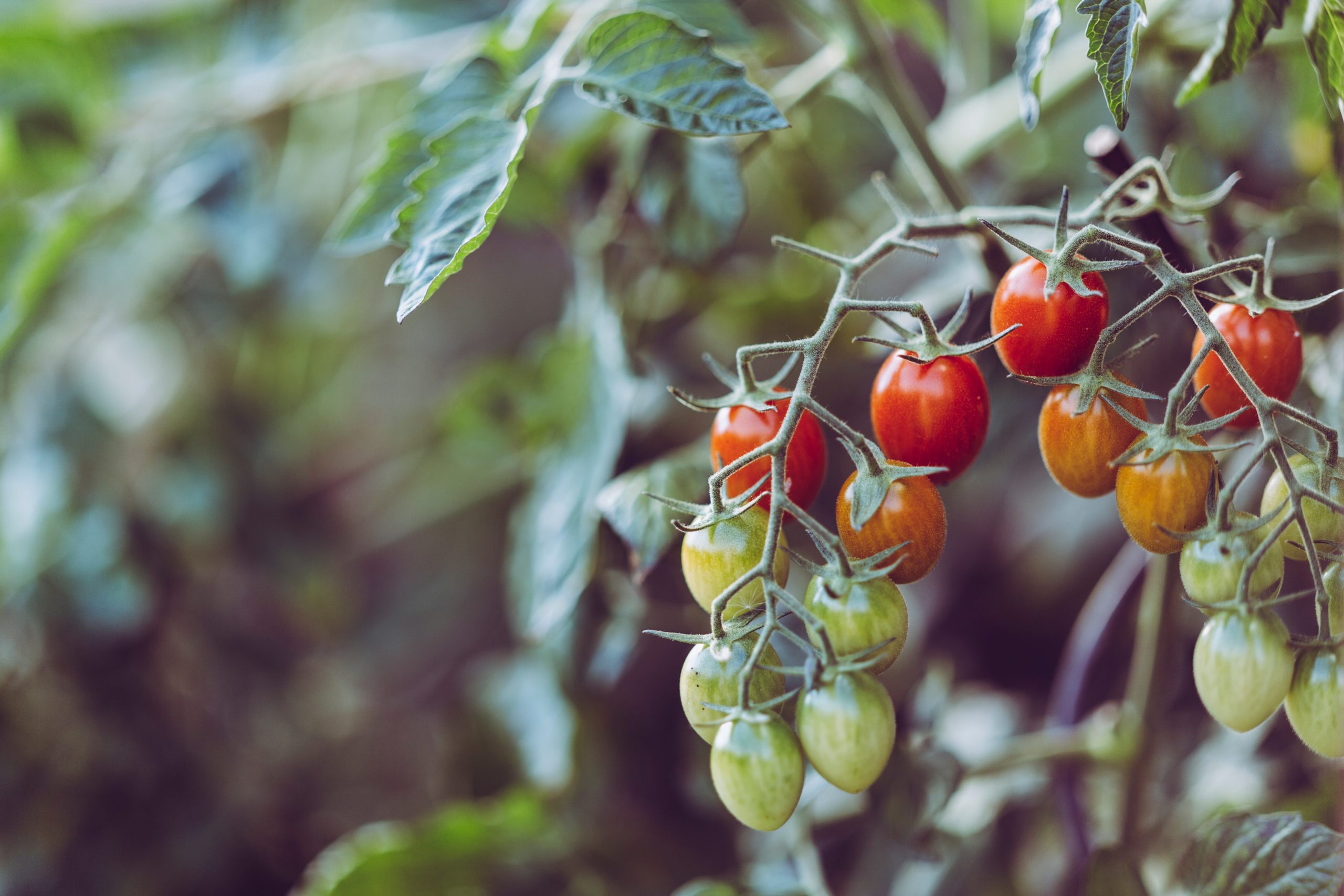 Cerco persone interessate a creare un'attività agricola nei pressi di Roma