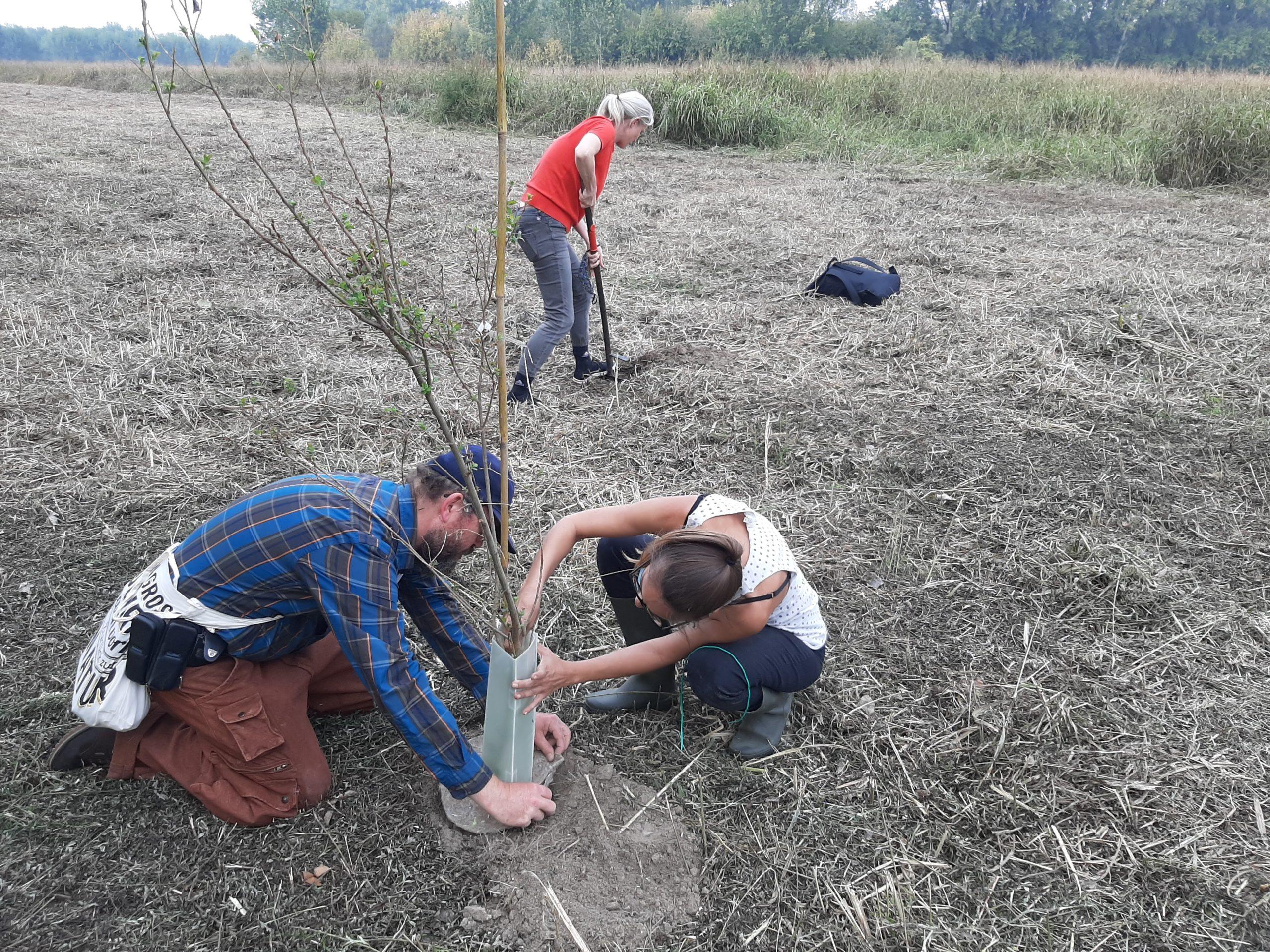 """Due partecipanti al progetto  """"Imparare per il futuro"""" piantano un albero nella foresta post-industriale. Credits: Andrea Degl'Innocenti."""