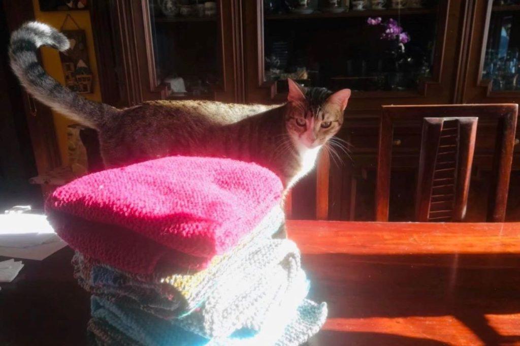 Micio gattile albisola