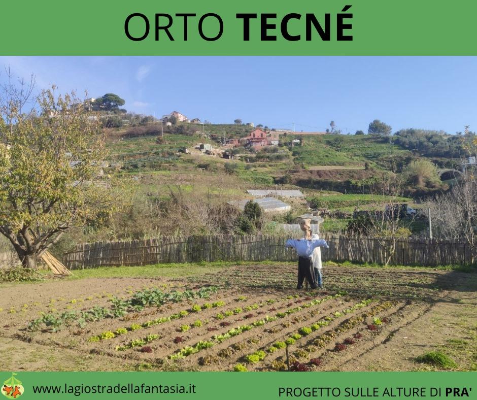 Orto tecne7