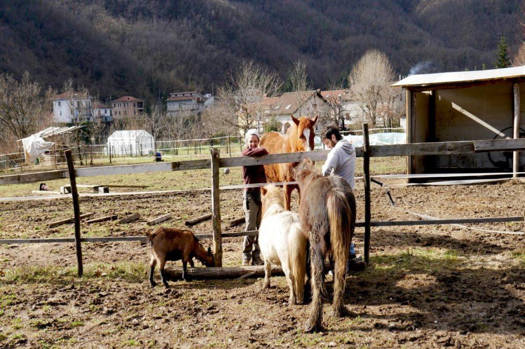 cavalli agrisola