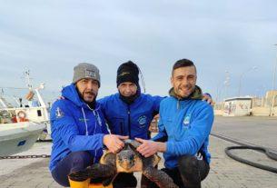 Il 14 febbraio saranno liberate le due tartarughe salvate dai pescatori