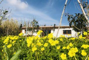 Offro casetta in Sardegna e cerco lavoro in ambito turistico e agricolo