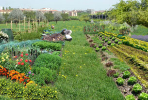 Ambiente e verde: come saranno fra vent'anni dipende da noi