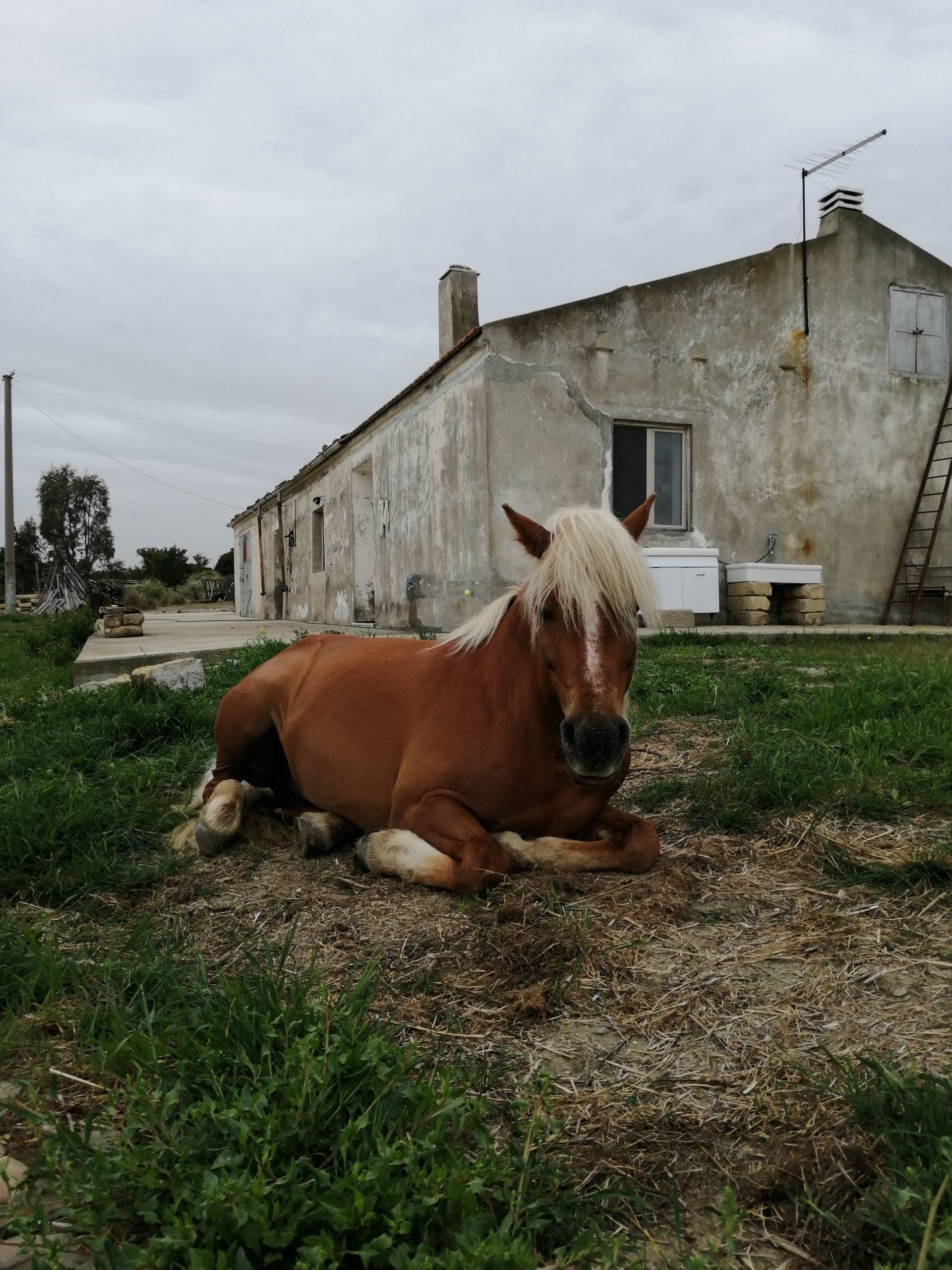 Cerco amante cavalli