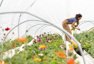 Come coltivare un orto biologico? Scopriamolo insieme a Let Eat Bi!
