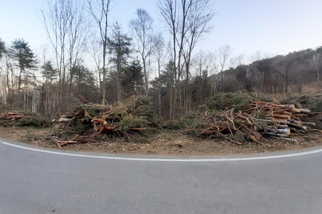 Taglio alberi1