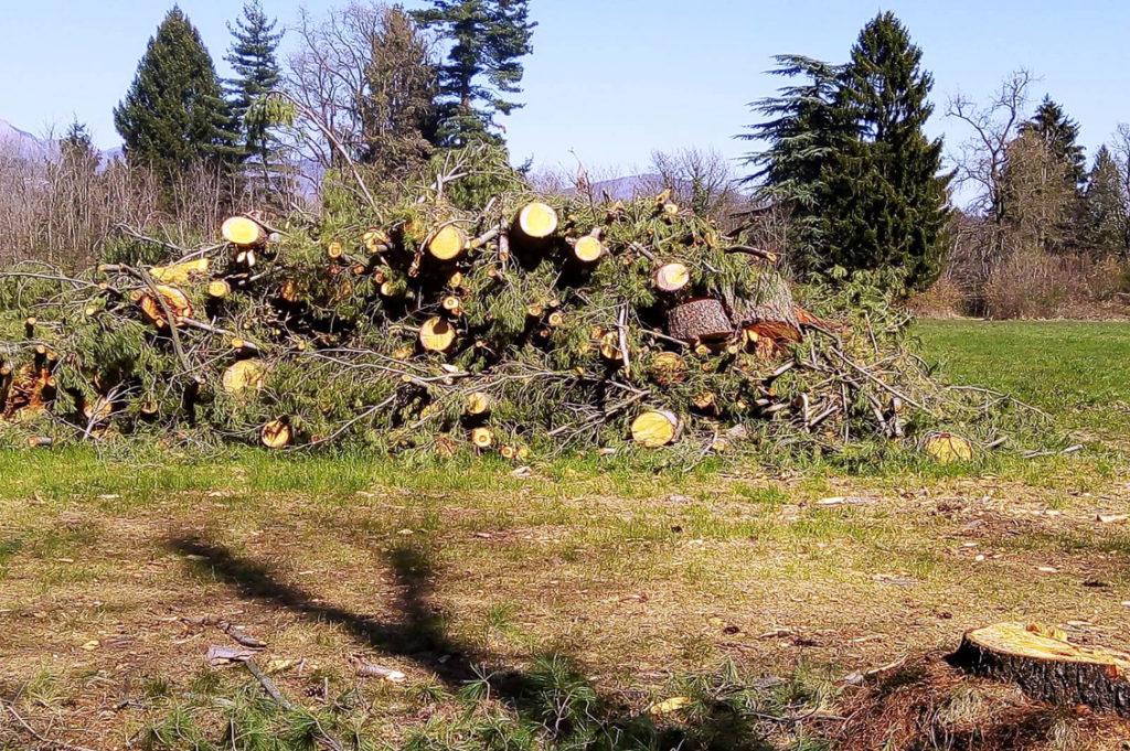 Taglio alberi2