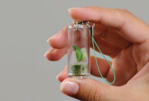 Minì, le piantine nelle microserre per educare alla natura