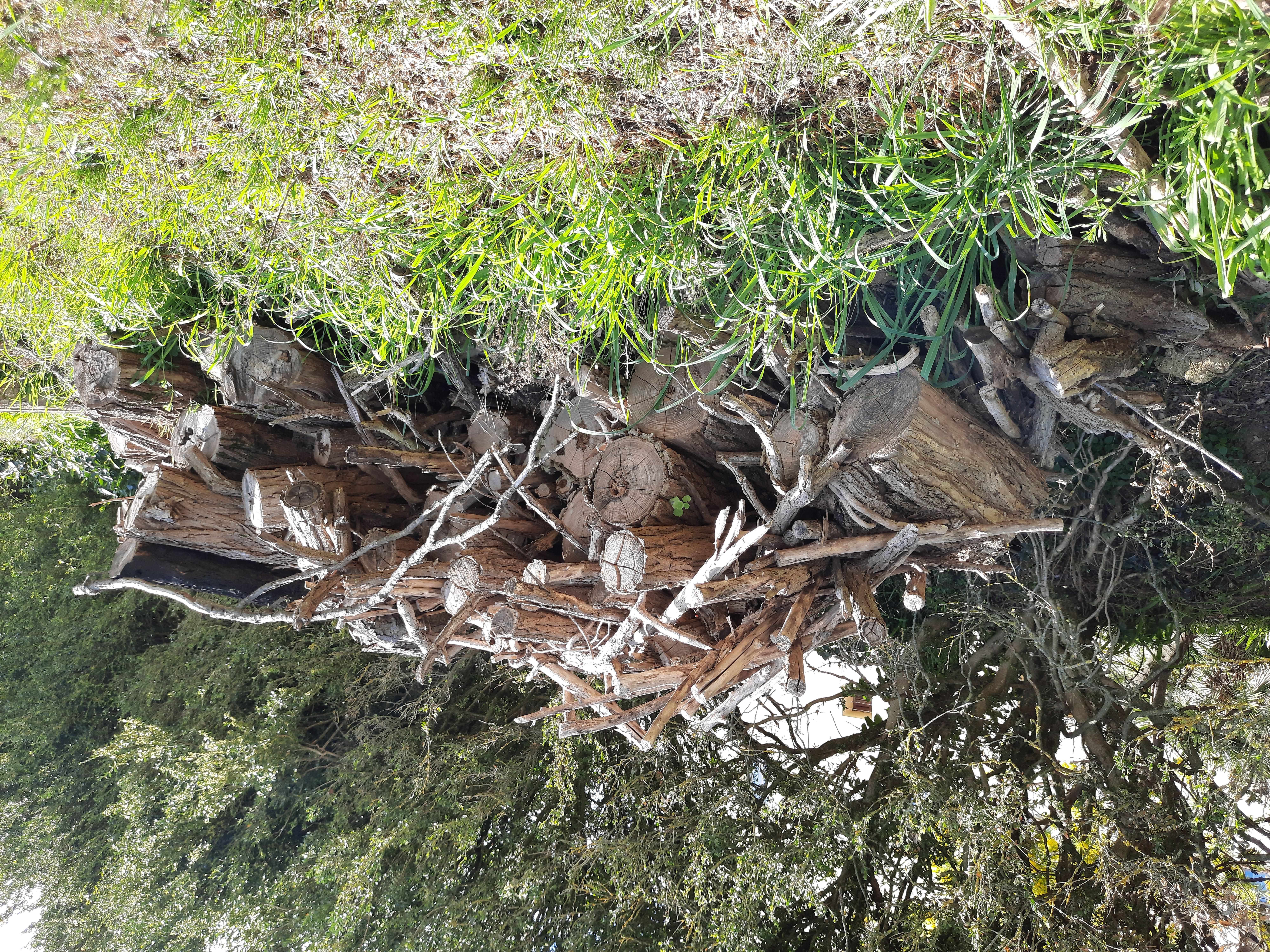 Offro Legna di Acacia
