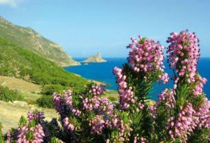 Macchia Mediterranea: custodirla è necessario per salvare la biodiversità