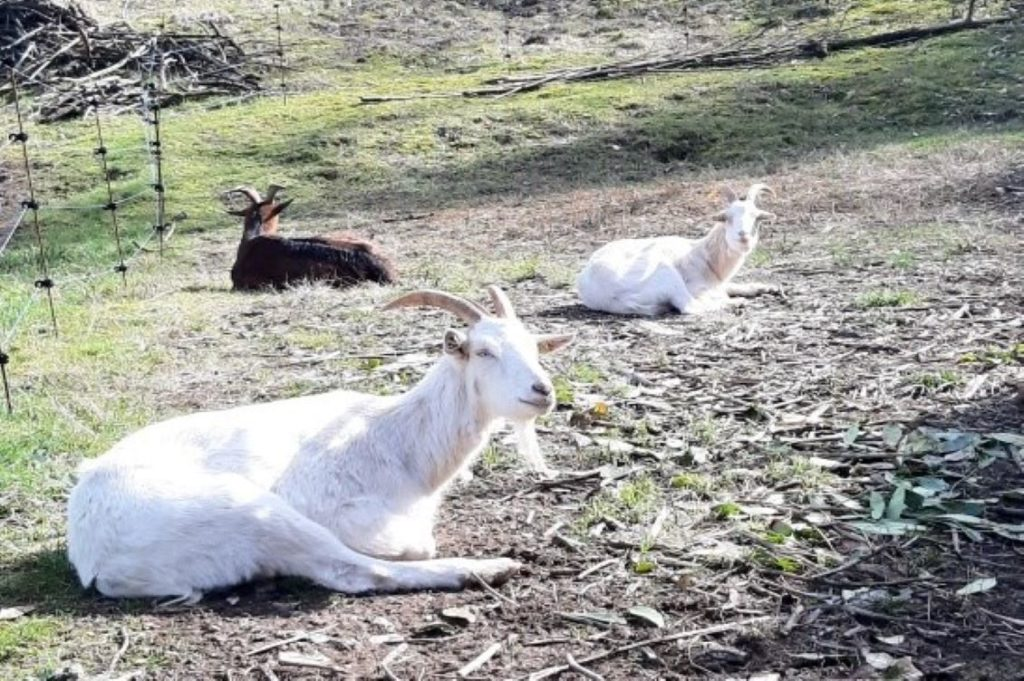 rifugio capre