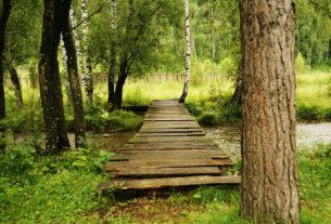 A Torino nascerà un bosco urbano per migliorare la vivibilità in città