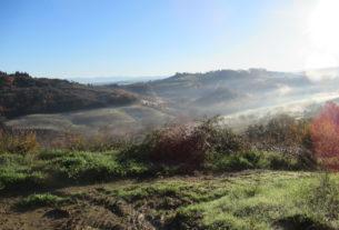 Offro terreno in comodato sulle colline di Firenze