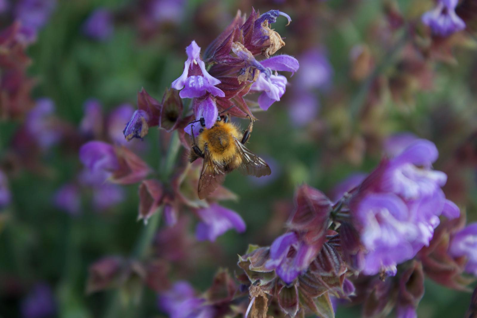 Cerco apicoltori consapevoli