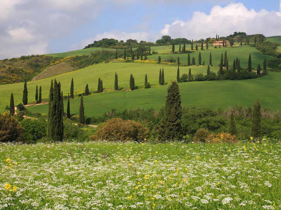 Cerco terreno oliveto frutteto