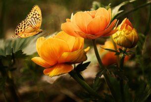 Amore, morte, il miracolo e la rinascita: l'incredibile storia di BB