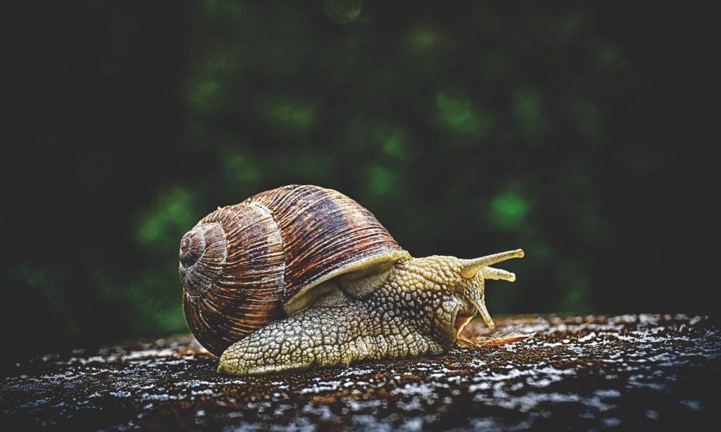 snail 3705324 1280