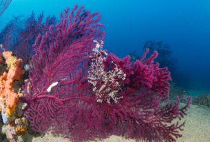 """Sea-Ty: """"Ecco come valorizziamo e tuteliamo le meraviglie del mar ligure"""""""