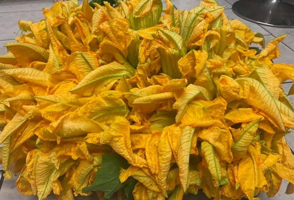 Fiori zucchina