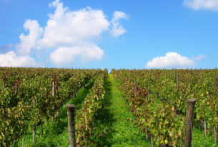 Vendo terreno con vigneti, uliveti e frutteti e due ruderi in Basilicata + cantina vinificazione + mansarda di fronte alla stazione ferroviaria