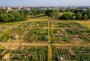 Orti, rigenerazione urbana e cibo recuperato per una Torino etica e verde