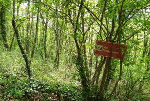 Fondo Forestale Italiano: compriamo boschi per salvarli dall'abbattimento