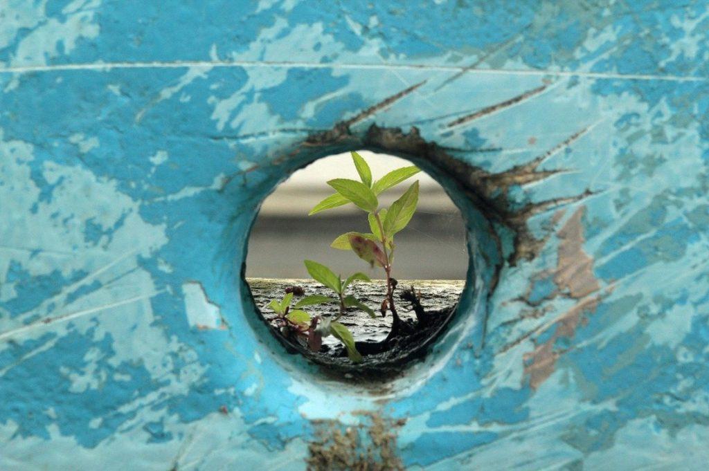 pianta resilienza