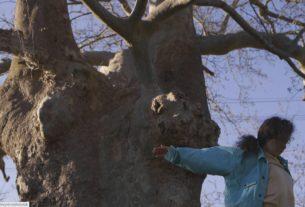 Un albero mi ha chiesto di danzare: la storia di due artiste che imparano dalla foresta